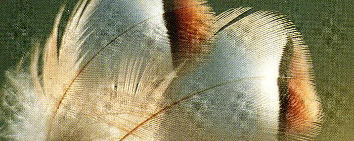 Lass deine Flügel wachsen und beginn zu fliegen!